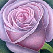 Big Rose Art Print by Ruth Addinall