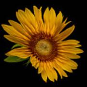 Big Sunflower Art Print