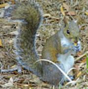 Big Tail Little Nut Art Print