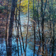 Big Thicket Water Reflection Art Print