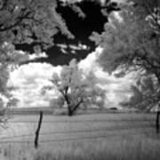 big tree in field IR Art Print