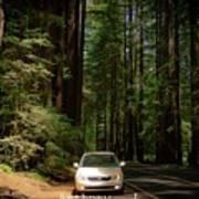 Big Tree Road Art Print
