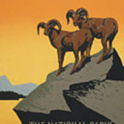 Bighornthe National Parks Preserve Wild Life Art Print