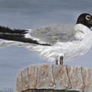 Bimini Gull Art Print