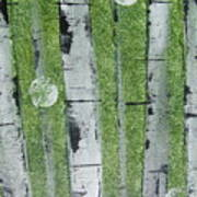 Birch - Green 1 Art Print by Jacqueline Athmann