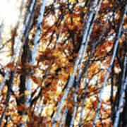 Birch And Oak And Sun Art Print