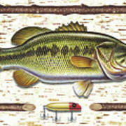 Birch Bass Print by JQ Licensing