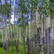 Birch Forest Art Print by Julie Lueders