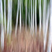 Birch Grove Impressions Art Print