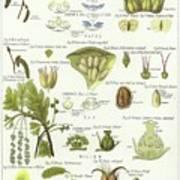 Birch, Hazel, Oak, And Willow Art Print