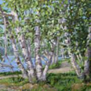 Birch Lane Art Print