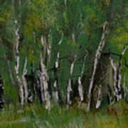 Birch Tree Panorama Art Print