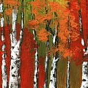 Birch Trees In An Autumn Forest Art Print