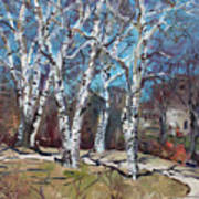Birch Trees Next Door Art Print