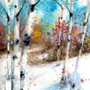 Birch Valley Art Print