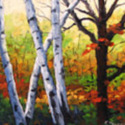 Birches 05 Art Print