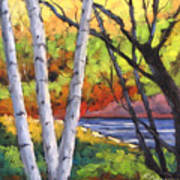 Birches 06 Art Print