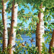 Birches Along The Androscoggin River Art Print
