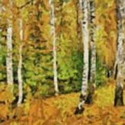 Birches And Spruces Art Print