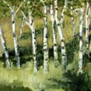 Birches On A Hill Art Print