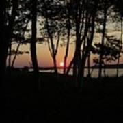Birches Watch The Sunset Art Print