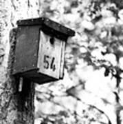Bird 54 Where Are You Art Print