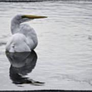 Bird Bath 4619 Art Print