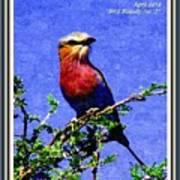 Bird Beauty - No. 7 P A With Decorative Ornate Printed Frame. Art Print