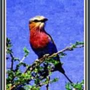 Bird Beauty - No 7 P B With Decorative Ornate Printed Frame. Art Print