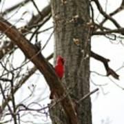 Bird In A Tree Art Print
