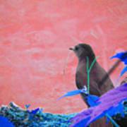 Bird In Abstract Art Print