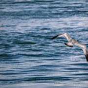 Bird In Flight Over Water Art Print