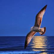 Bird In Moonlight Art Print