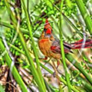 Bird In The Brush H D R Art Print