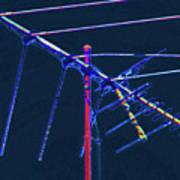 Bird Kite At Midnight Art Print