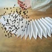 Bird Migration 2 Art Print