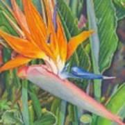 Bird O Paradise Art Print