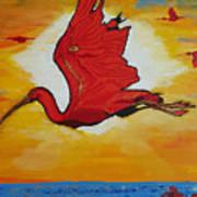 Bird Of Beauty, Loves Light In Flight Art Print