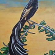 Bird Of Beauty, Ngiculela Art Print