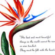 Bird Of Paradise Poem Art Print