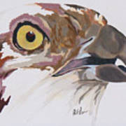 Bird Of Prey  Osprey Art Print