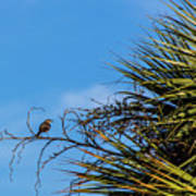 Bird On A Palm Branch Art Print