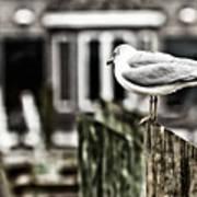 Bird On A Pole Art Print