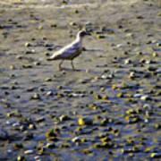 Bird On Beach Art Print