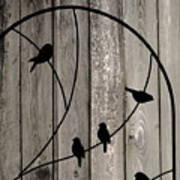 Bird Silhouettes On The Fence Art Print