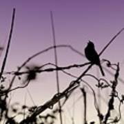 Bird Sings Art Print