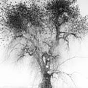 Bird Tree Land Bw Fine Art Print Art Print