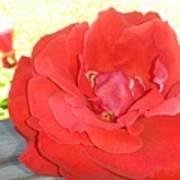 Bird Watching Red Rose Art Print