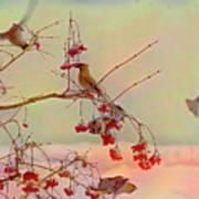 Bird Waxwing Art Print