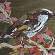 Bird White Eye Art Print